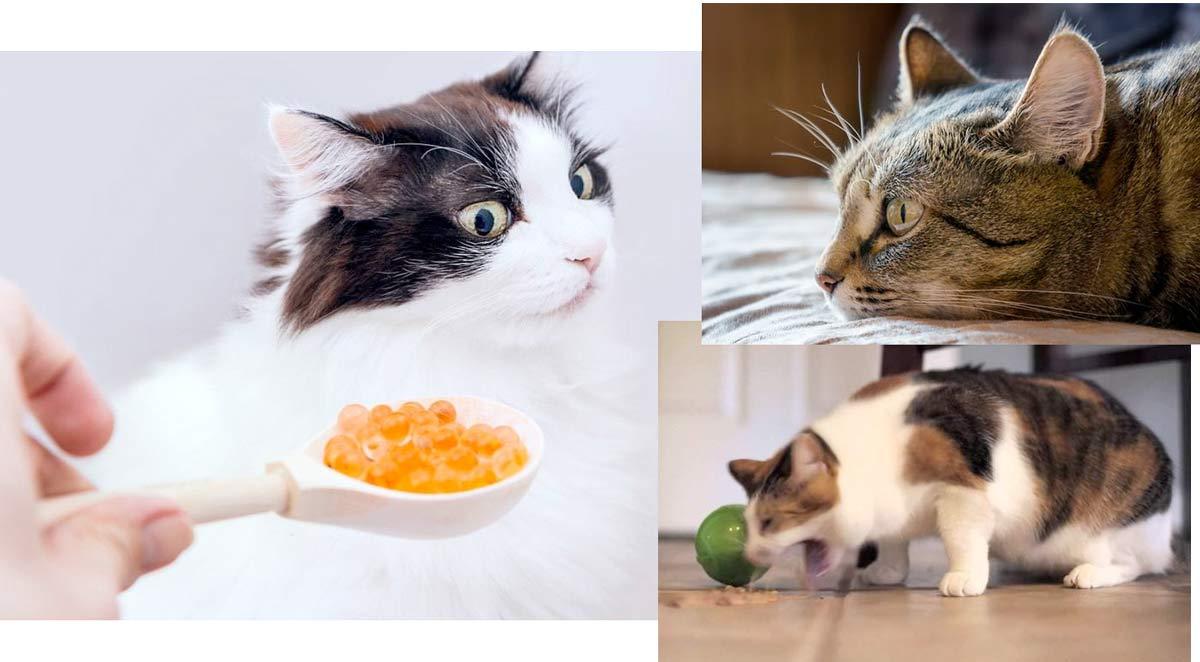 Кошка Сильно Похудела И Отказывается От Еды. Почему кот ничего не ест, сильно похудел и ослабел: лечение и симптомы