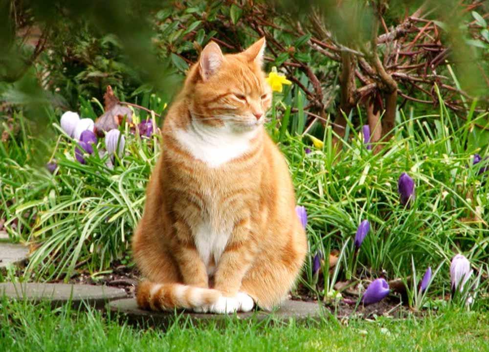 Кошка на даче: едем отдыхать вместе фото