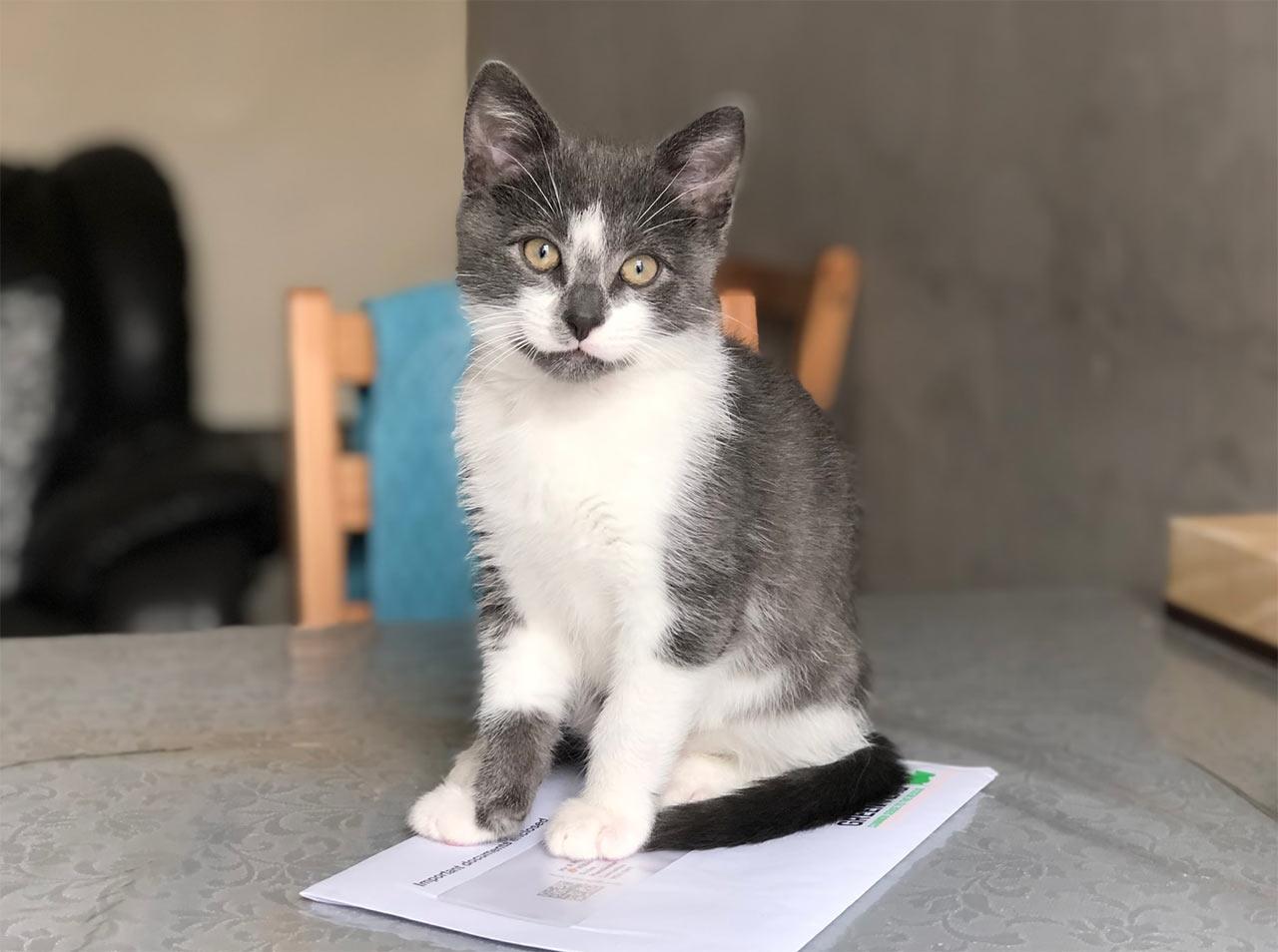 Обзор популярных лакомств для кошек: о чем говорят отзывы фото
