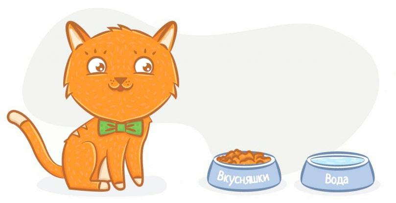 правильный рацион в питании кошек фото