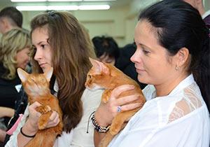 В Усть-Каменогорске состоялась выставка кошек фото