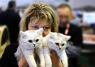 Усатые звезды и подрастающие чемпионы: в Москве прошла выставка кошек Felina Belissima фото