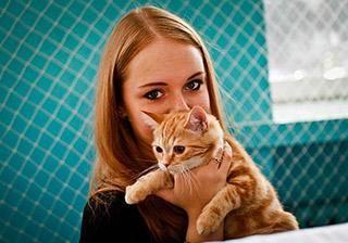 Выставка кошек в Благовещенске собрала более 100 усатых участников фото