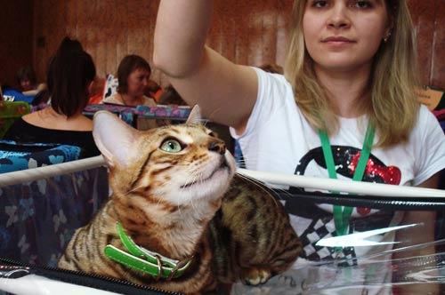 Международная выставка кошек в Ульяновске фото