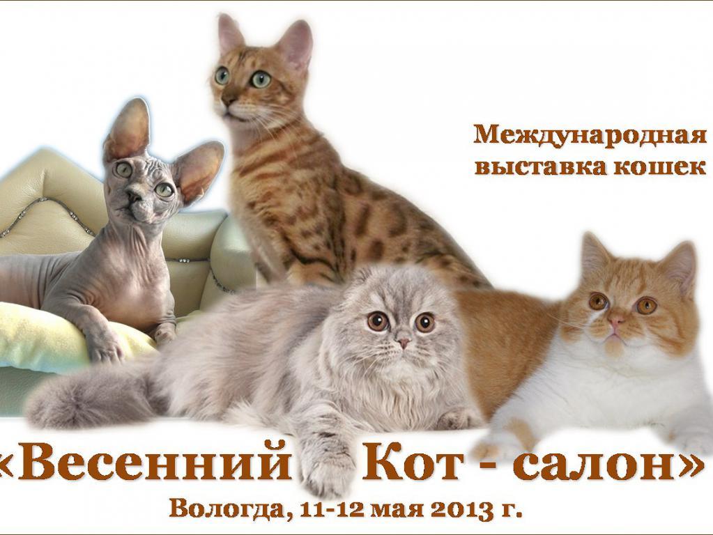 Выставка кошек «Весенний кот-салон» открыта в Вологде фото