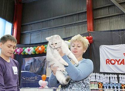В июле в Тюмени пройдёт международная выставка кошек WCF фото