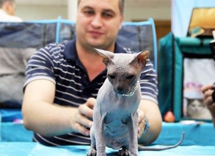 В Волгодонске прошла крупная выставка кошек (фоторепортаж) фото