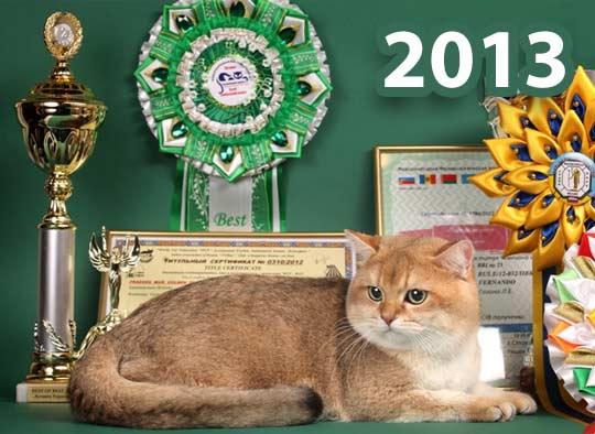 Расписание выставок кошек 2013 фото