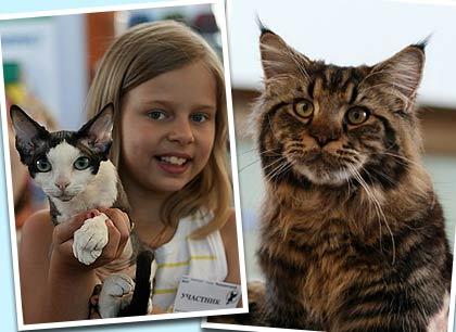 Выставка кошек прошла в Одессе фото