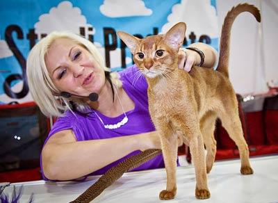 ИнфоКот – самая интересная выставка кошек фото