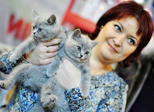 Выставка-раздача котят и кошек пройдет во Владивостоке фото