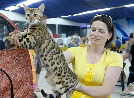 Международная выставка кошек проходит в Костанае фото