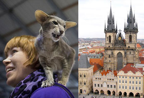 Самые титулованные кошки мира на выставке в Праге фото