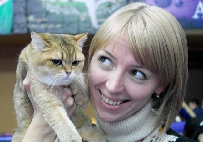 Выставку кошек в Благовещенске посетила кошка-лисичка фото