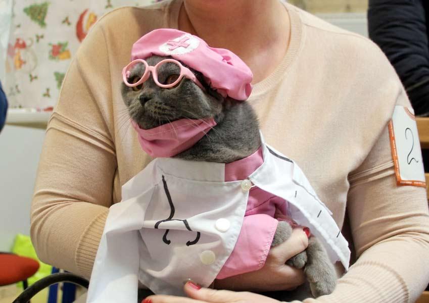 В Омске кошка в костюме доктора выиграла в конкурсе фото
