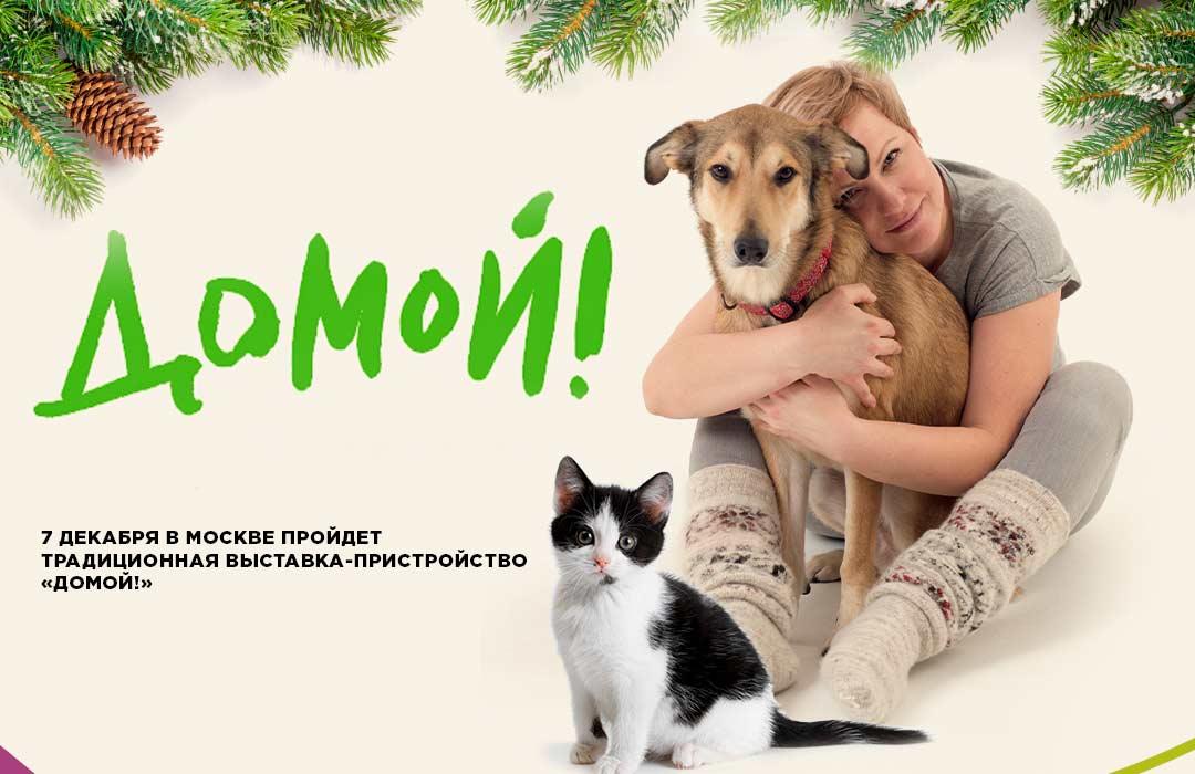 7 декабря в Москве пройдет традиционная выставка-пристройство «Домой!» фото