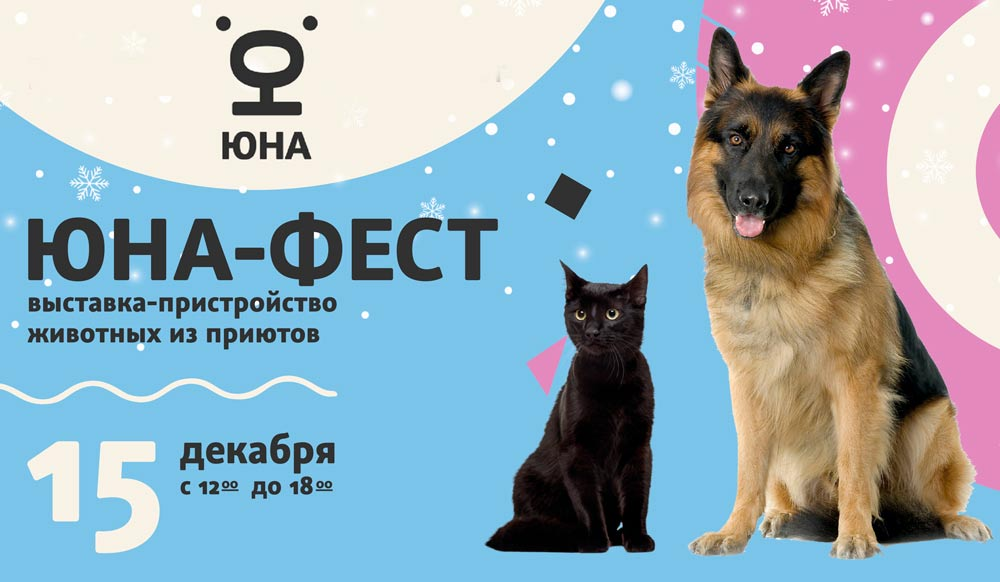 Выставка кошек и собак из приютов «Юна-Фест»: время творить чудеса! фото