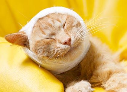Ожоги у кошек фото