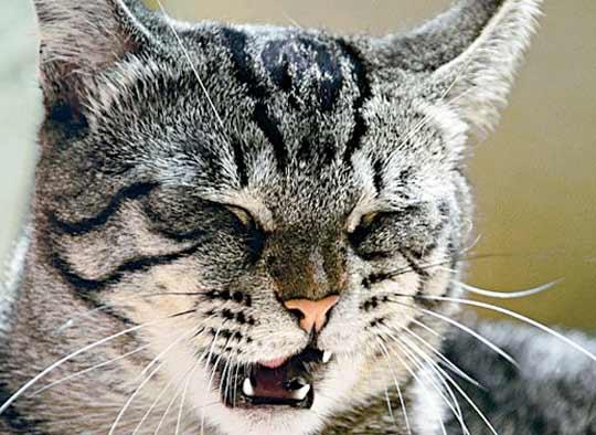 Почему кошка чихает фото