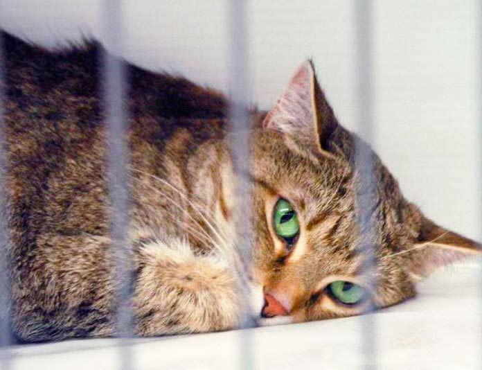 Болезни нервной системы у кошек фото