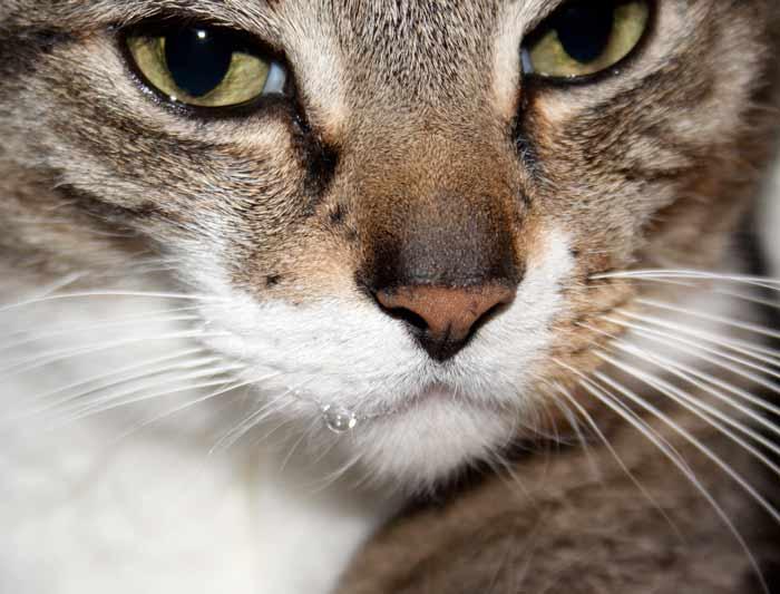 Почему у кошки текут слюни фото