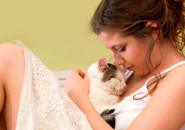 Диабет у кота. Опыт хозяйки кота-диабетика фото