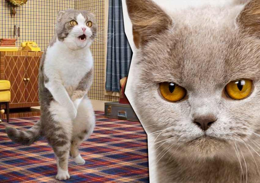 Что делать если кошка отказывается от лотка фото
