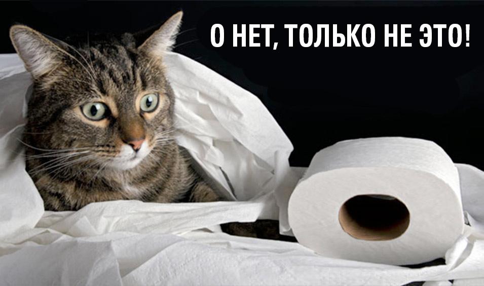 Цистит у кошек и котов фото
