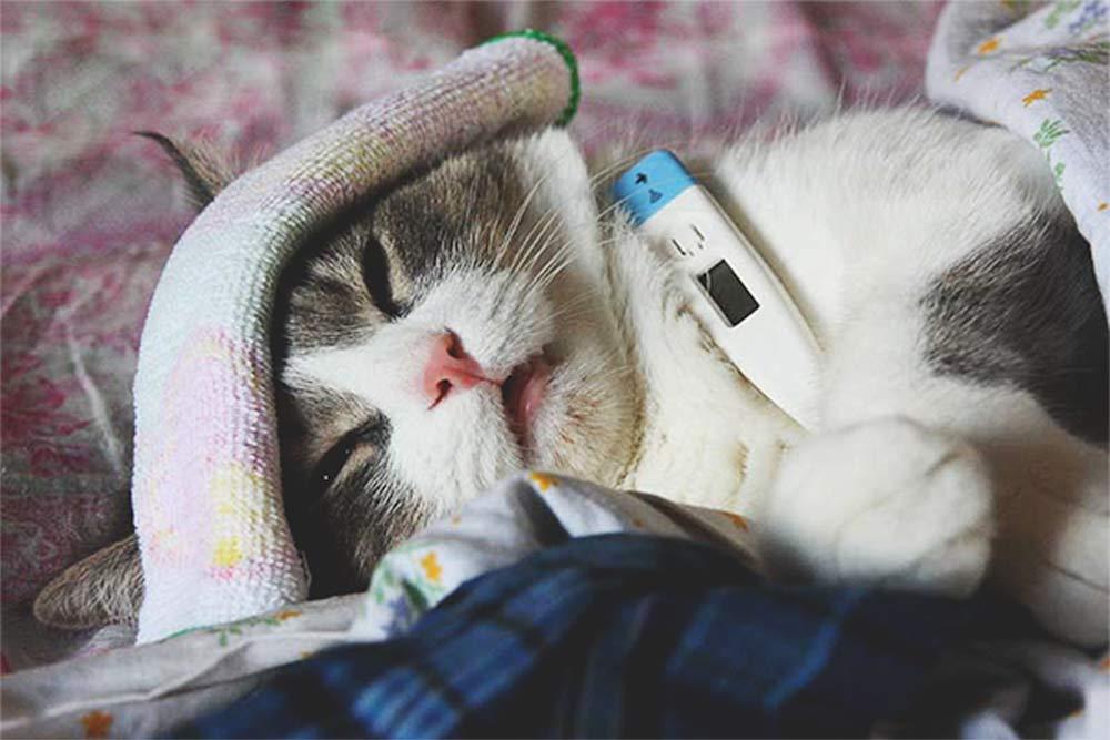 Простуда у кошек фото