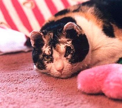 Кошка Скарлетт фото