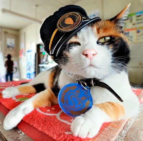 Кошка Тама фото
