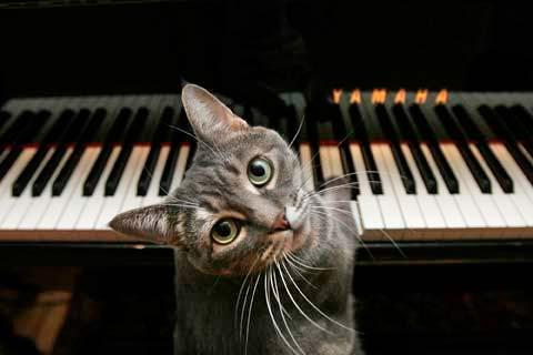 Кошка Нора фото