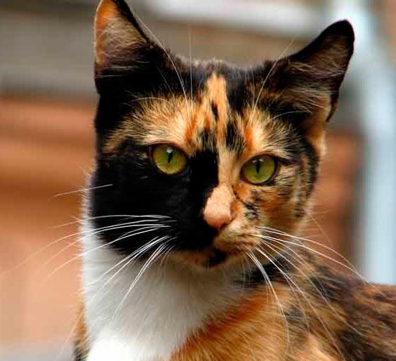 Кошка Селима фото