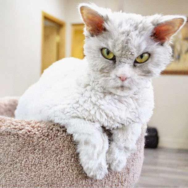 Cуровый кот Альберт фото