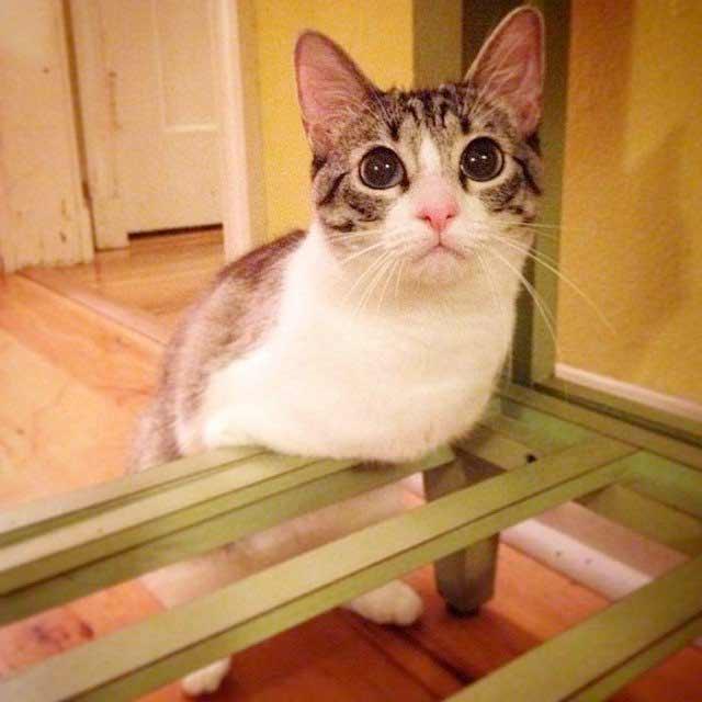 Кошка Ру фото