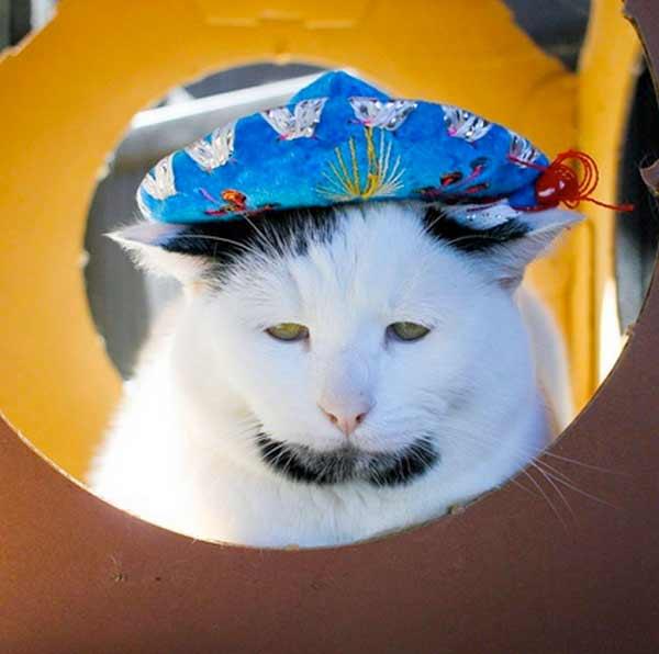 Кот Гэри фото