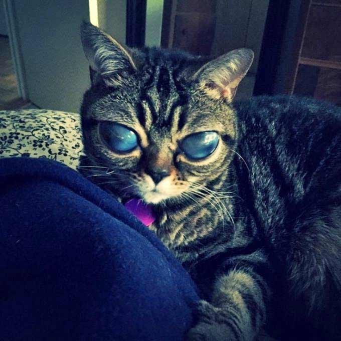 Кошка-инопланетянка фото
