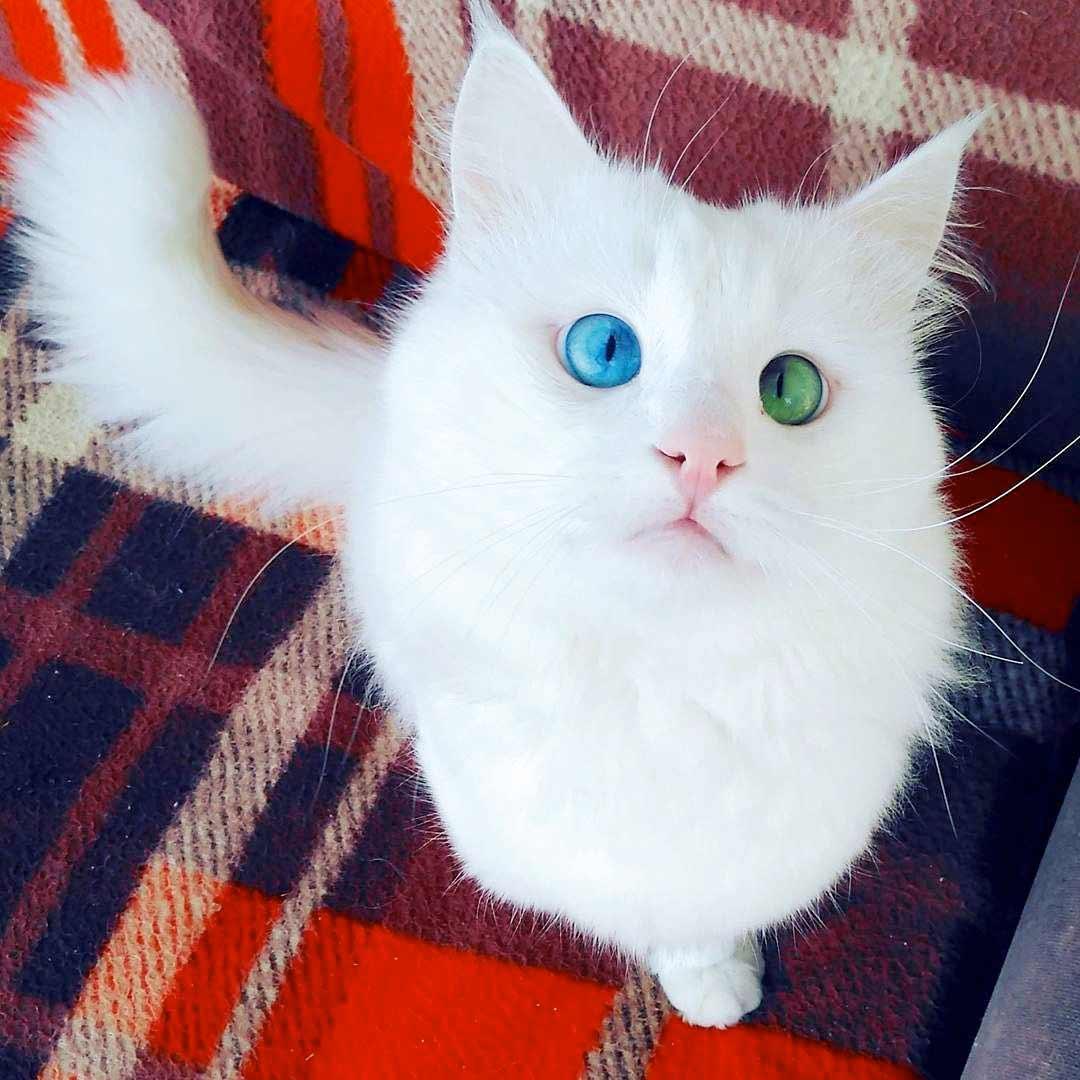 Кот Алос фото